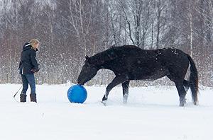лошадь дотрагивается до мяча