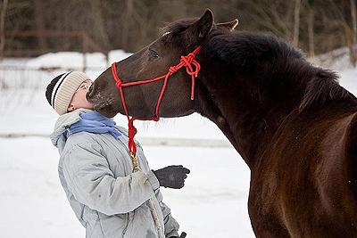 лошадь настроена на сотрудничество
