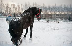 Нежелательное поведение лошади