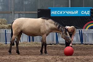 Обучение лошади мягкими методами