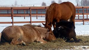 лошади спят