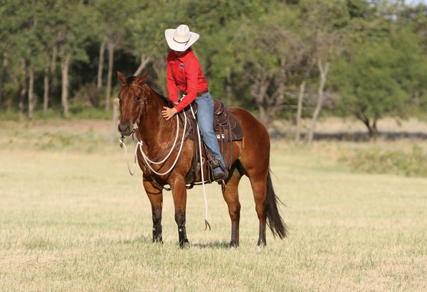 Нежелательное поведение лошади на прогулке