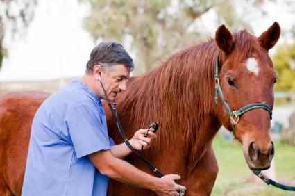 Лекарства и ваша лошадь