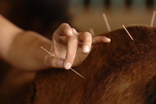 Аллергия у лошадей: Акупунктура
