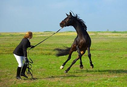 Успокаивающие травы для лошадей