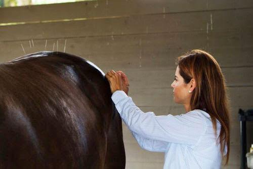 Ветеринары обращаются к альтернативной медицине при лечении лошадей