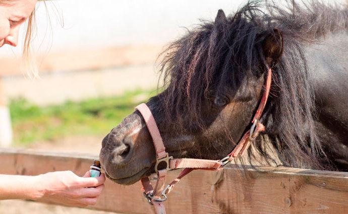 Ароматерапия в лечении заболеваний опорно-двигательного аппарата лошадей