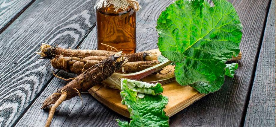 Лопух: факты для питания и польза для здоровья