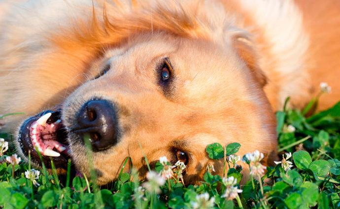 Основные лекарственные травы для домашних животных