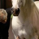 Акупрессура для лошади