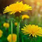 Витамины и минералы от природы